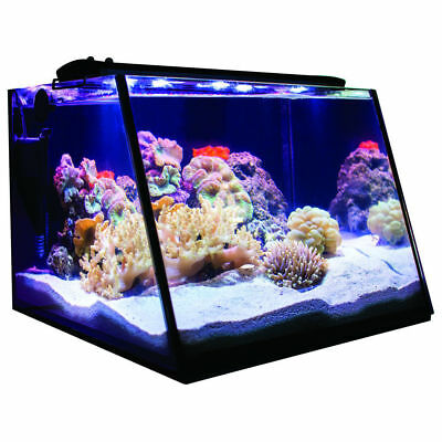 Full View Angled Fish/Pet Aquarium Tank 5 Gallon Modern Kit w/Overflow