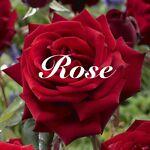rose9308