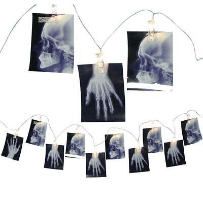 X-RAY PHOTO LIGHT STRING HAUNTED HOUSE Halloween Prop SKELETON ASYLUM MAD LAB BO - Halloween Laboratory Props
