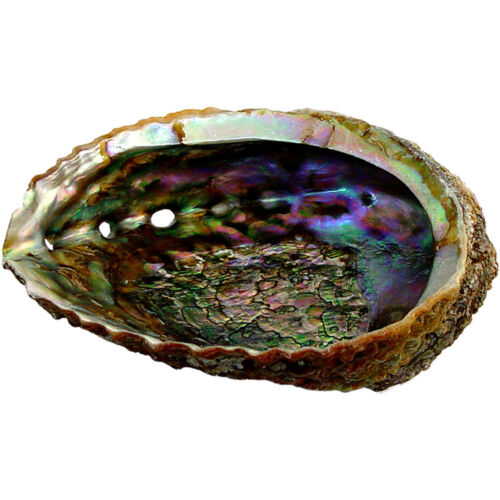 "Premium Extra Large Abalone Shell 5-6"" Smudging, burning sage incense resin bowl"
