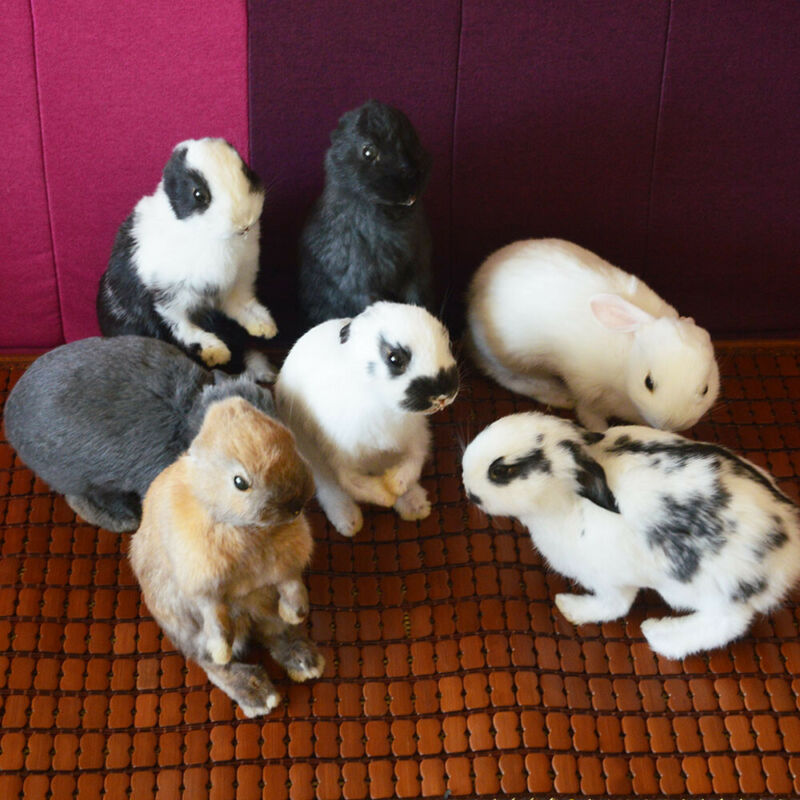 Taxidermy stuffing rabbit,bunny fur specimen Teaching / Decoration (1pcs random)
