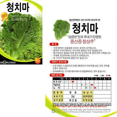 200 Asparagus Seeds Asparagus Officinalis Vegetable Seed 아스파라거스