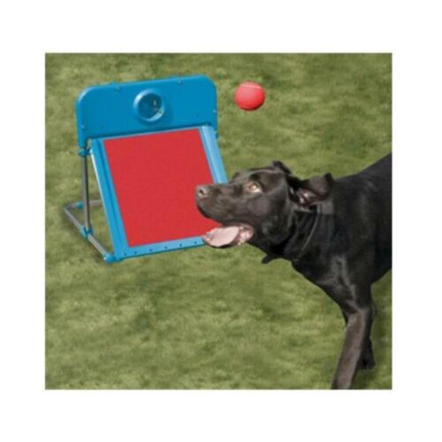 Rosewood Dog Agility Flyball Training