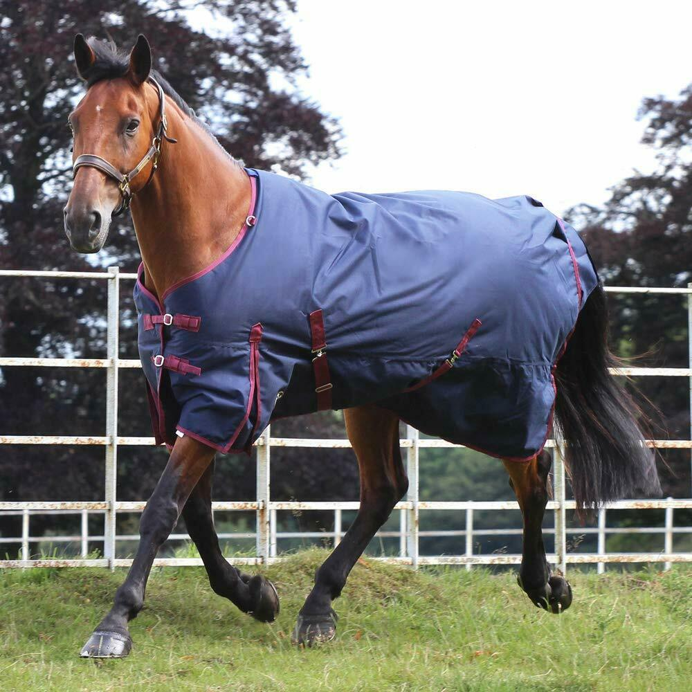 50g Fill Waterproof Horse Turnout Rug