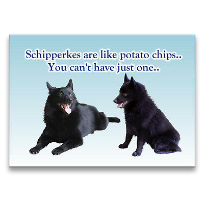 SCHIPPERKE Can't Have Just One FRIDGE MAGNET New DOG