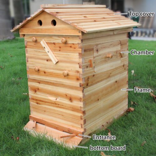 Wooden house box 7 pcs auto bee honey hive behive frames for Hive homes