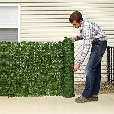 Conifer Instant Leylandii Maple Ivy Balcony hedgerow windbreak devon cornish BN