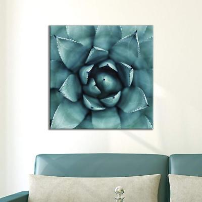 Close Up Gallery (Wall26 - Square Close up of Succulent Plant Gallery - CVS - 24x24 inches)