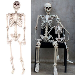 Jointed Human Skeleton Decoration - 160cm Tall - Halloween Party Prop Decoration