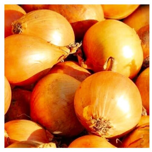 Utah Yellow Sweet Spanish Onion Seeds | NON-GMO | Heirloom | Fresh Garden Seeds