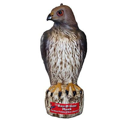 Bird-B-Gone MMRTH1 Plastic Life Like Red Hawk Decoy Bird Repellent