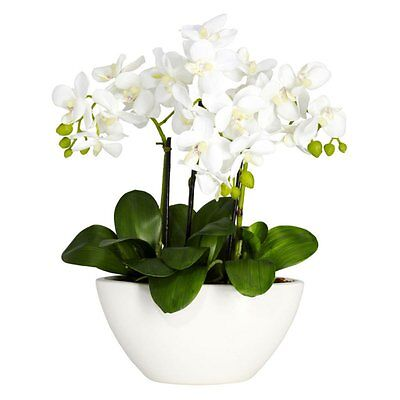 Phalaenopsis Silk Flower Arrangement  White
