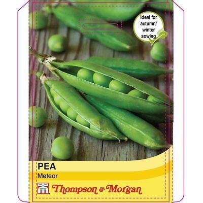 250 graines Thompson /& morgan-légumes-pois ceresa