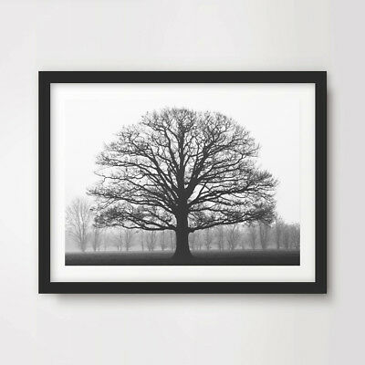 BLACK WHITE WINTER TREE BRANCHES ART PRINT Photography Home Decor Wall Picture