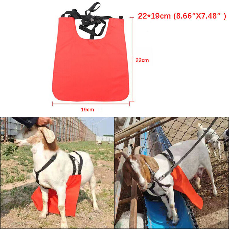Anti Mating Anti Breeding Apron and Harness For Goats/Sheep Medium Size Red