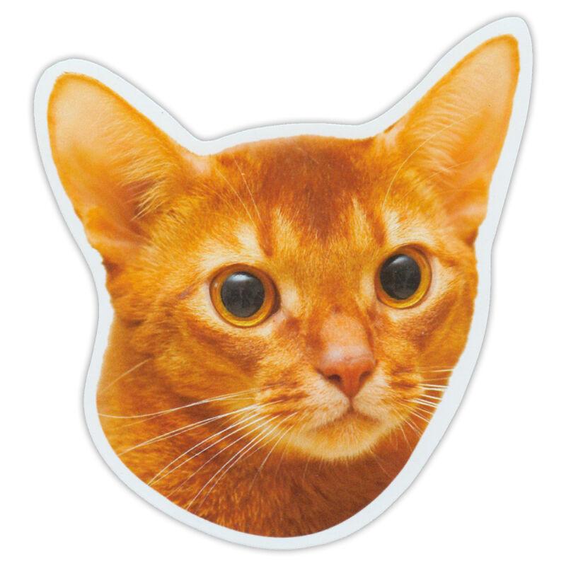 Magnetic Bumper Sticker - Abyssinian Cat Breed Magnet - Cars, Trucks, SUVs