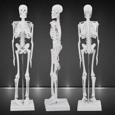 14 Human Anatomical Anatomy Skeleton Medical Teaching Model Stand