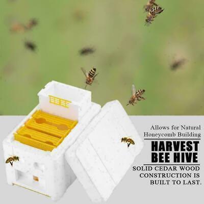 New Auto Honey Beehive Frames Beekeeping Kit Bee Hive King Box Pollination Box S