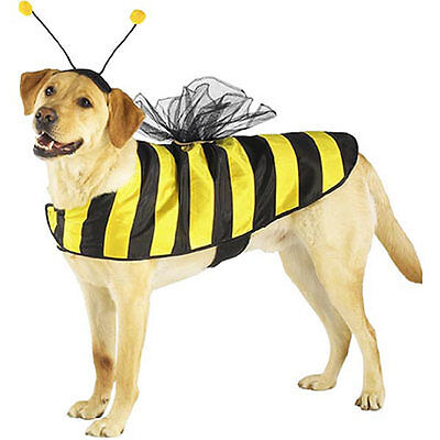 Casual Canine Bumble Bee Costume Satin Mesh-Wings Hook Loop Belly Band Antennae  ()