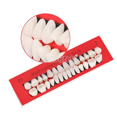 Dental Dedicated Tooth Box Plastic Teeth Model For Teaching Model 10sets Box