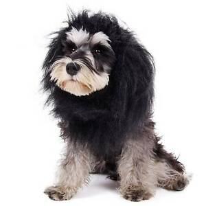 Dog grooming Greensborough Banyule Area Preview