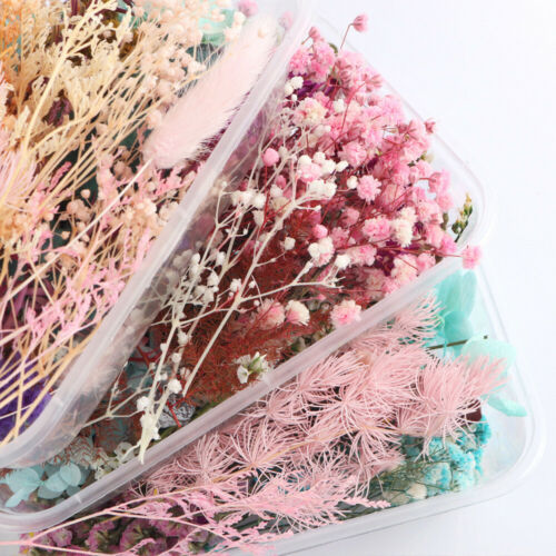 1 Box Bulk Mixed Dried Flowers Plants Epoxy UV Resin Aromatherapy Candle Random