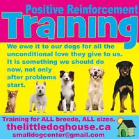 PUPPY KINDERGARTEN - ALL BREED, ALL SIZE - Join now!