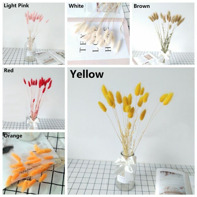 Bunny Tail Grass,50cm Length for Floral Decor Light Yellow Dried Natural Lagurus Ovatus Bunches