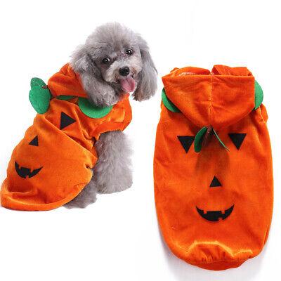 ❤️ Haustier Hund Halloween drapieren Kürbis Cosplay Kostüm - Lustig Hund Kostüme