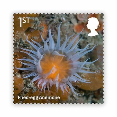 GB Wild Coasts Fried-egg Anemone 1st single (1 stamp) MNH 2021 after Aug 1