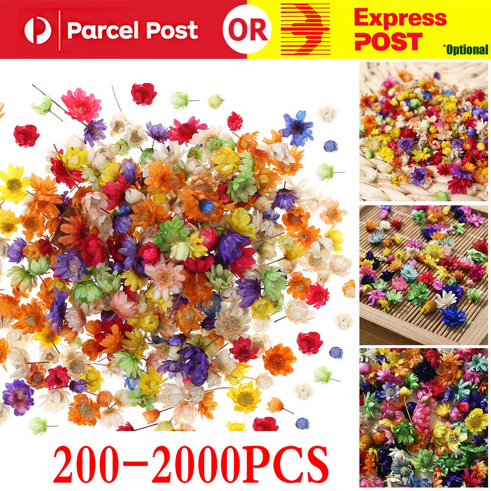 Jewellery - 200-2000PCS Real Dried Flowers For Art Craft Epoxy Resin Candle Making Jewellery