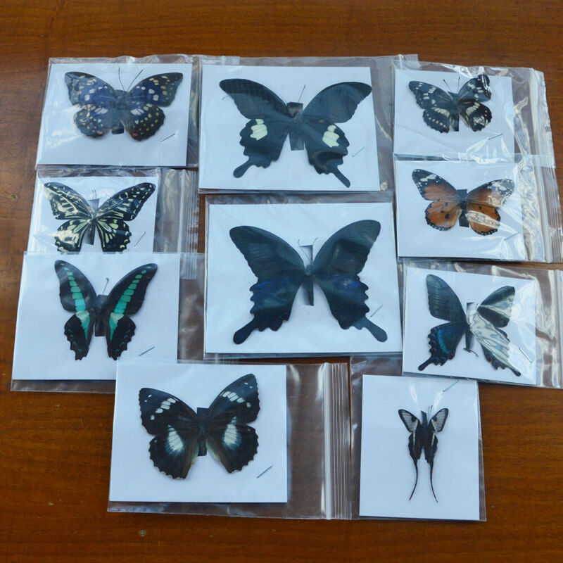 10Pcs Natural Unmounted Butterfly Specimen Artwork Material Decor