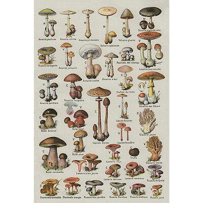 Mushroom Chart Educational Art Silk Poster 13X20 24X36 Inch Wall Decor 008