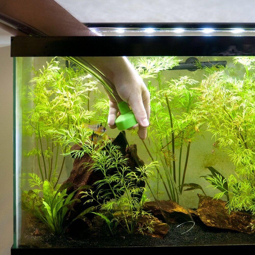 Freshwater aquarium fish maintenance - Aquarium Fish Tank Cleaning And Maintenance