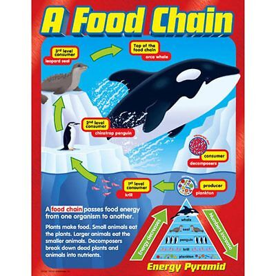 A Food Chain Learning Chart Trend Enterprises Inc. T-38186 ()