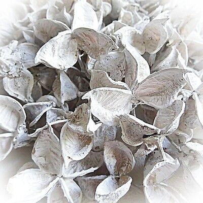 DekoEins® Naturmaterial Cotton Pods 150 g weiß Deko getrocknete Baumwoll Knospen