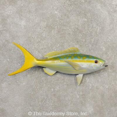 Fish - Fish Replicas