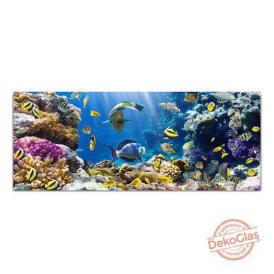 Glasbilder Echtglas Korallenriff Wandbild 125x50cm Float