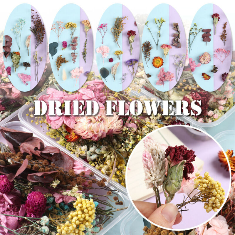 Real Dried Flowers For DIY Art Jewellery Epoxy Resin Craft Pendant Making