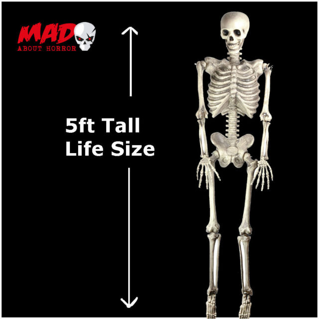 Hanging Skeleton LIFE SIZE 5ft Halloween Party Decoration/Prop Outdoor Cemetery