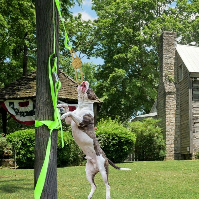 Outdoor Hanging Bungee Rope Tug Of War Interactive Dog Toy For Medium US STOCK - $10.99