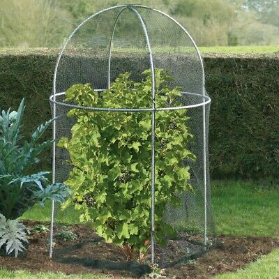 Domed Roof Fruit Cage