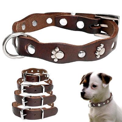 Best Leather Small Medium Dog Collar with Metal Paw Print Studded XXS XS S M