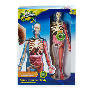 Edu Science Lab Squishy Human Body Model
