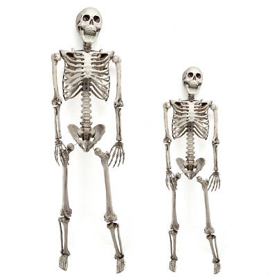 3/5.6ft  Halloween Skull Skeleton Poseable Human Full Life Size Prop Party - Plastic Skeleton