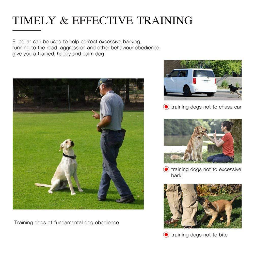 Waterproof Dog Training Electric Collar Rechargeable Remote Control 875 Yards 3