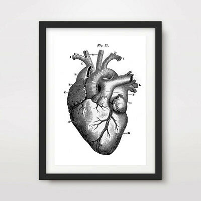 BLACK WHITE HUMAN HEART VALVES DIAGRAM ART PRINT Poster Wall Chart - Human Heart Art