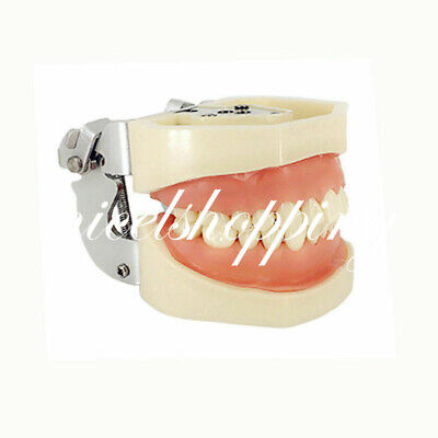 Dental Kilgore Nissin Typodont Model 200 Type With Removable Screw-in Teeth
