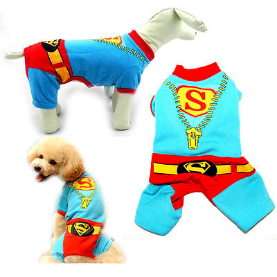 Doggy superman costume.