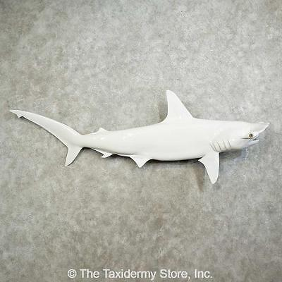 - #16026 P+ | Hammerhead Shark Replica Taxidermy Mount For Sale